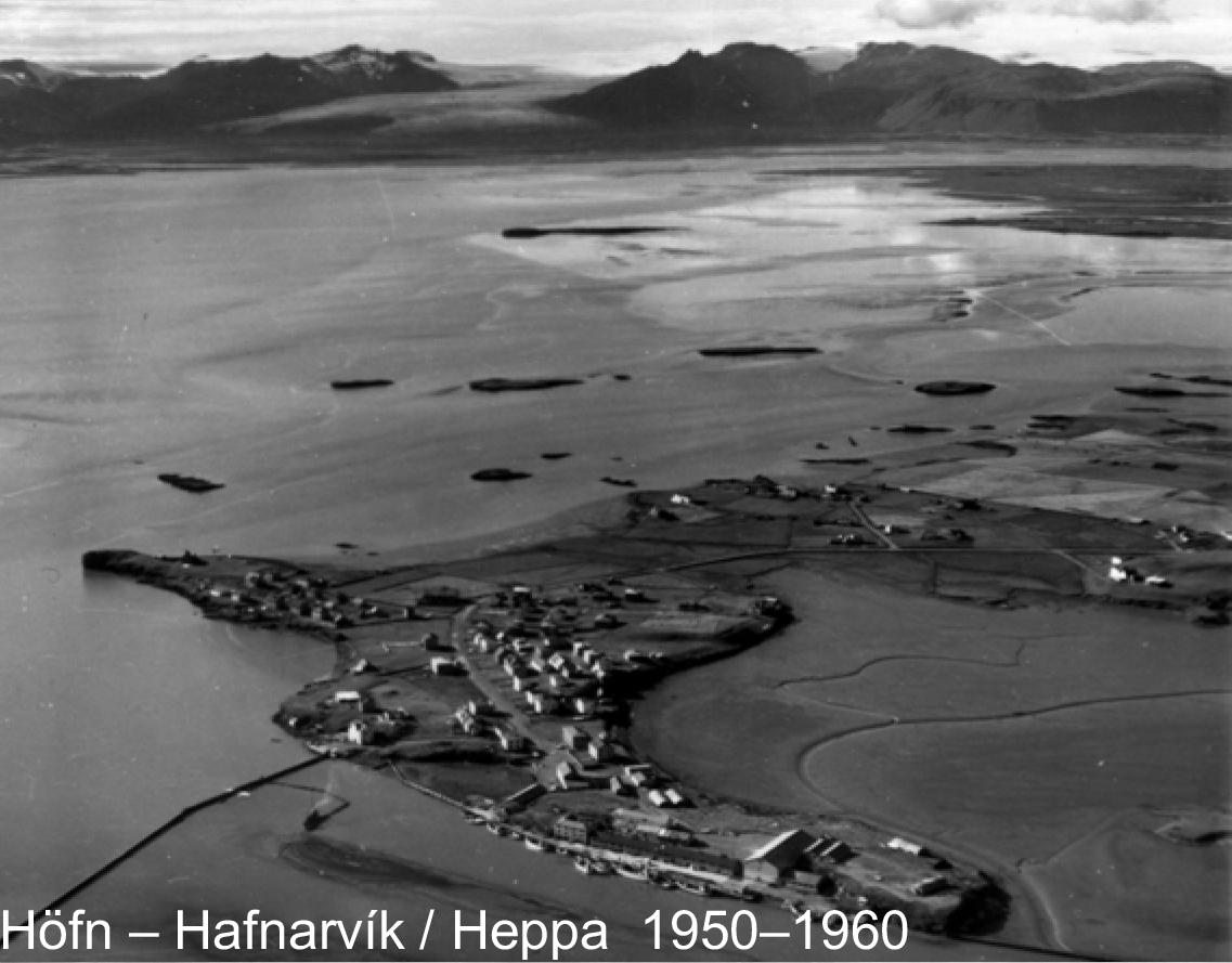Hafnhepp1950